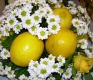Centrotavola limoni e margherite