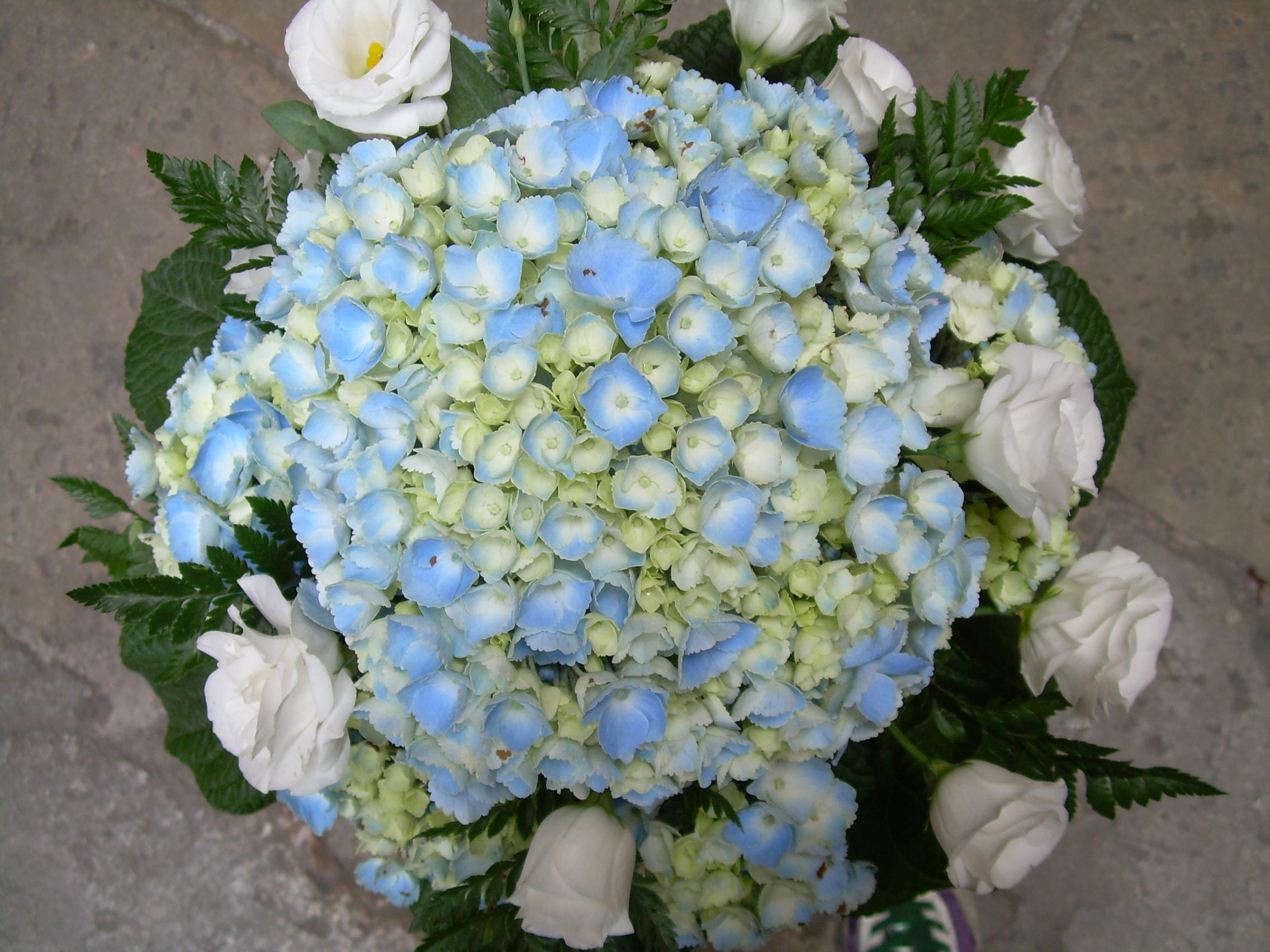 Ortensie Blu : Elisabetta fiori e piante centrotavola con ortensie blu