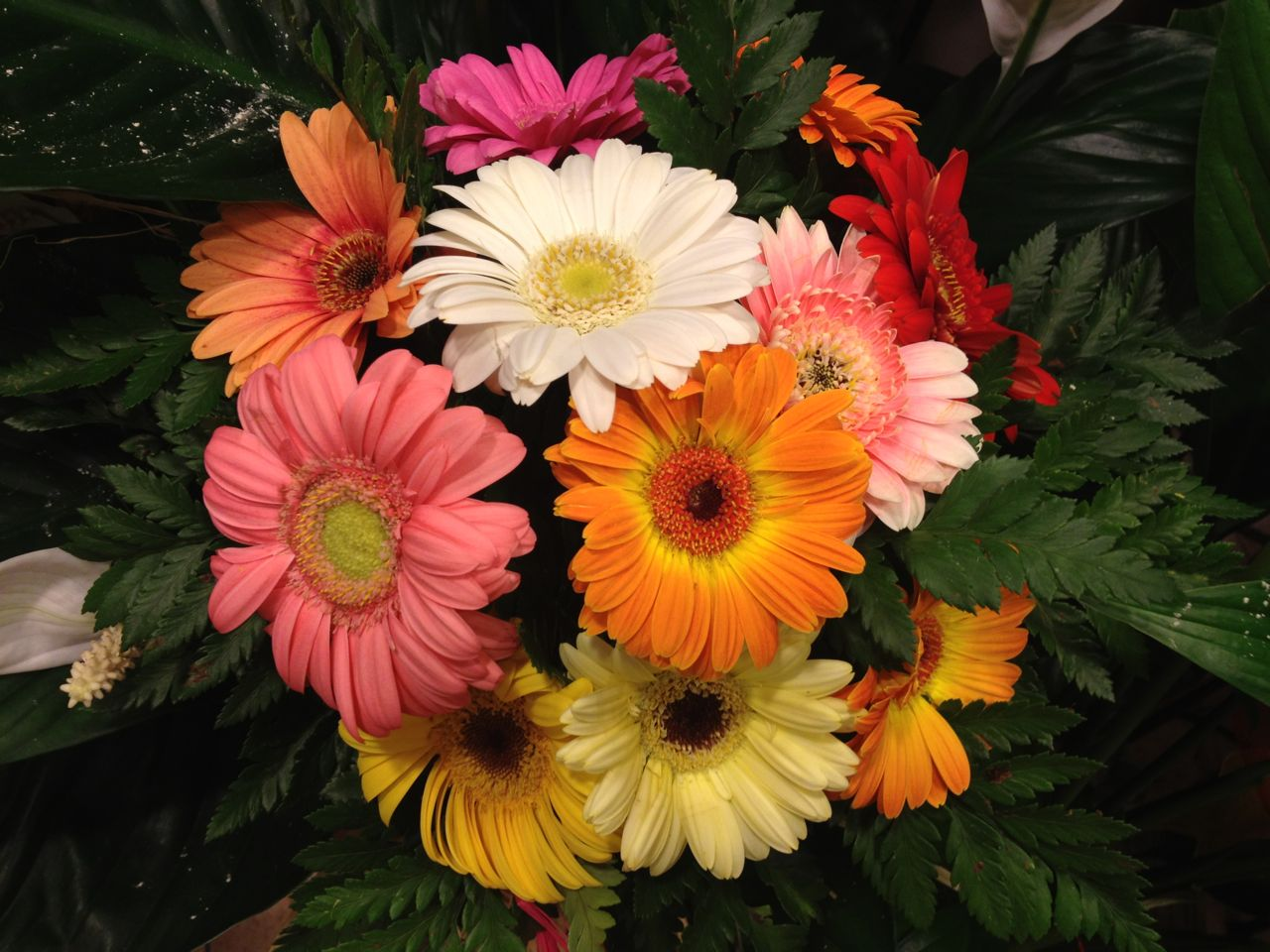Elisabetta fiori e piante bouquet di gerbere estive for Fiori gerbere