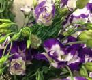 Lisianthus bianco e viola