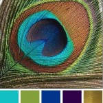 peacock-wedding-colors