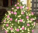 Composizione con rose aqua, lisianthus bianco, papiro e panicum