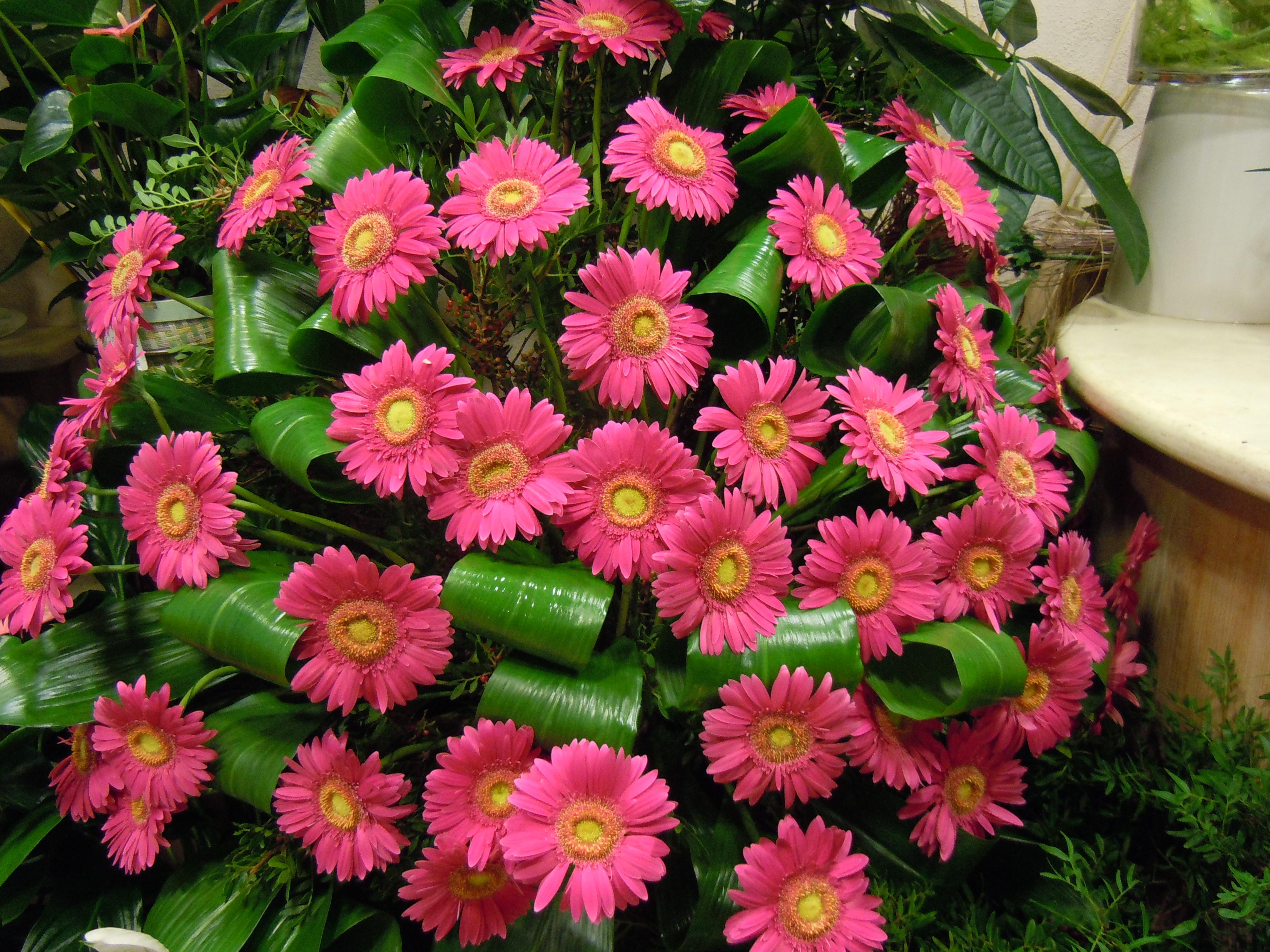 Elisabetta fiori e piante composizione di gerbere fucsia for Fiori gerbere